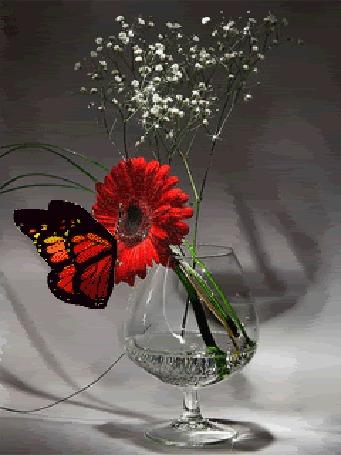 Анимация Бабочка сидит на красной гербере, которая стоит в прозрачном бокале с водой (© Akela), добавлено: 15.05.2015 09:10