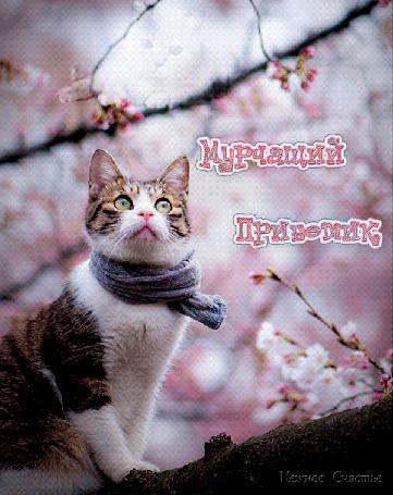 Анимация Мяукающий кот в шарфе сидит на дереве на размытом розовом фоне цветущих веток, Мурчащий приветик, Нежное Счастье (© Natalika), добавлено: 15.05.2015 10:34