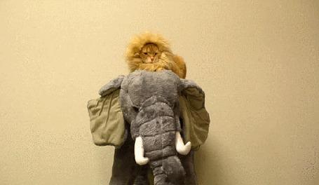 Анимация Рыжий кот одетый в костюм льва, сидит на игрушечном слоне с бивнями и зевает