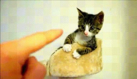 Анимация Маленький котенок играет с пальцем протянутой к нему человеческой руки (© Akela), добавлено: 16.05.2015 17:48