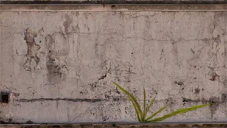 Анимация На серой бетонной стене, оживает рисунок цветка желтого одуванчика с зелеными листьями (© Akela), добавлено: 16.05.2015 17:50