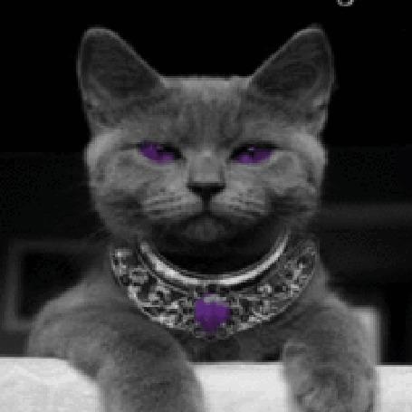 Анимация Кот с фиалковыми глазами и в колье (© zlaya), добавлено: 17.05.2015 12:33