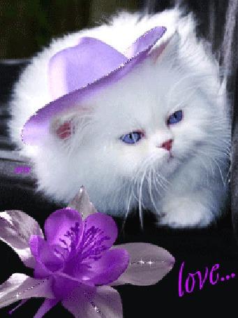 Анимация Белый голубоглазый пушистый кот в сиреневой шляпке, love
