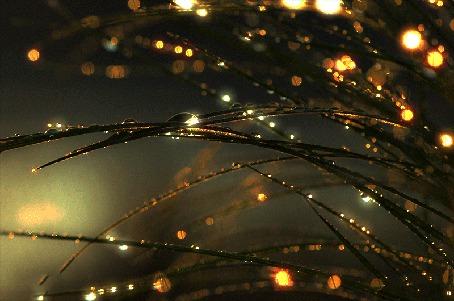Анимация Капельки росы с солнечными бликами на траве (© царица Томара), добавлено: 18.05.2015 01:37