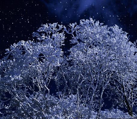 Анимация На развесистый куст ложится хлопьями пушистый снег (© царица Томара), добавлено: 18.05.2015 01:40