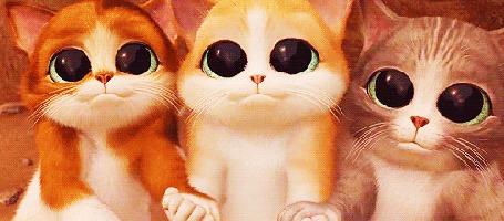 Анимация Три котенка из мультфильма Кот в сапогах / Puss in Boots (© Arinka jini), добавлено: 18.05.2015 02:12