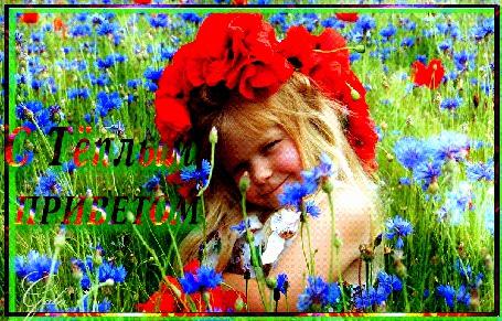 Анимация Смешная девчушка в венке из алых маков сидит в поле васильков, С Теплым приветом, Gala
