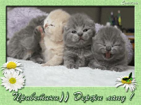 Анимация Компания разноцветных котят, Приветики)) Держи лапу! Lamerna (© Natalika), добавлено: 18.05.2015 21:53