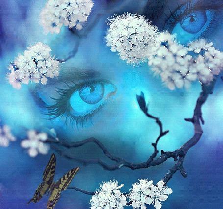 Анимация Цветущая ветка дерева с бабочкой, на фоне синих женских глаз (© Akela), добавлено: 19.05.2015 13:14
