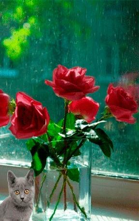 Анимация Дымчатая кошка сидит возле вазы с красными розами, которая стоит на подоконнике окна, за стеклом которого идет дождь