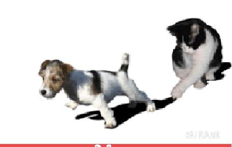 Анимация Собака вырвалась и убежала от собственной тени, которую придерживала лапой кошка (© Akela), добавлено: 20.05.2015 03:38