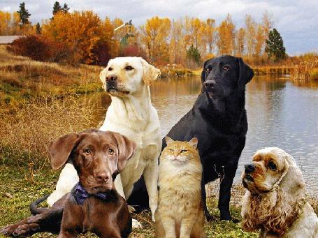 Анимация Собаки разных пород на берегу озера, неожиданная агрессия кота (© Миропия_Мира), добавлено: 21.05.2015 19:38