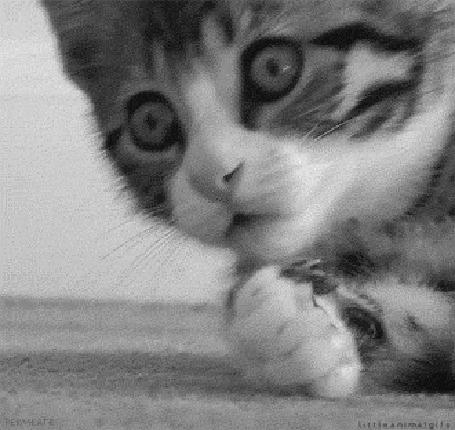 Анимация Маленький смешной котенок (© zmeiy), добавлено: 21.05.2015 20:00
