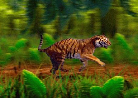 Анимация Бегущий тигр на фоне природы (© zmeiy), добавлено: 21.05.2015 22:38
