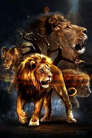 Анимация Львы на природе (© zmeiy), добавлено: 21.05.2015 22:48