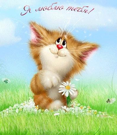 Анимация Влюбленный кот гадает на ромашке среди бабочек на полянке, Я люблю тебя! sima