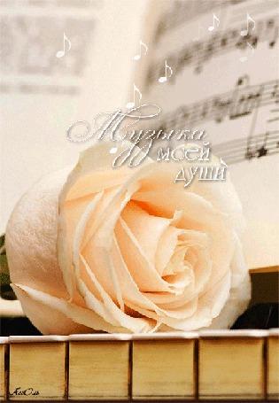 Анимация Кремовая роза на клавишах около нот, Музыка моей души, АссОль