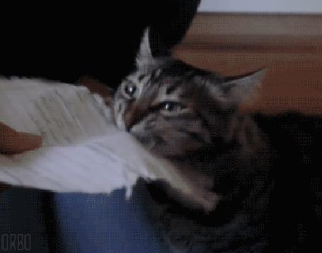Анимация Кошка ест бумагу (© Seona), добавлено: 24.05.2015 00:10