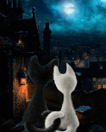 Анимация Влюбленные черный кот и белая кошка, сидят качаясь на крыше дома обнявшись хвостами и смотрят сверху на ночной город