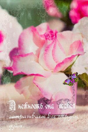 Анимация Красивая бабочка на нежной розе в вазочке, А нежность, она такая затрагивает все струны души, Лилия (© Natalika), добавлено: 25.05.2015 16:30