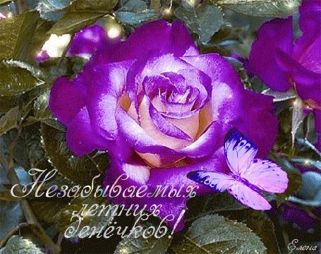 Анимация Бабочка на сиреневой раскрывающейся розе, Незабываемых летних денечков! Елена (© Natalika), добавлено: 25.05.2015 16:48