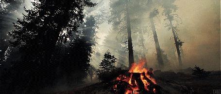 Анимация Костер посреди леса (© Seona), добавлено: 28.05.2015 11:26