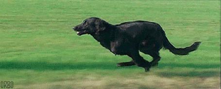 Анимация Собака бежит по полю