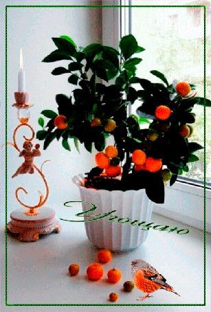 Анимация Мандариновое деревце стоит на подоконнике, рядом стоит свеча и сидит птичка, за окном дождик в городе (Угощаю) надюшка (© Natalika), добавлено: 28.05.2015 15:28