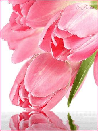 Анимация Розовые тюльпаны отражаются в воде, S. Anna