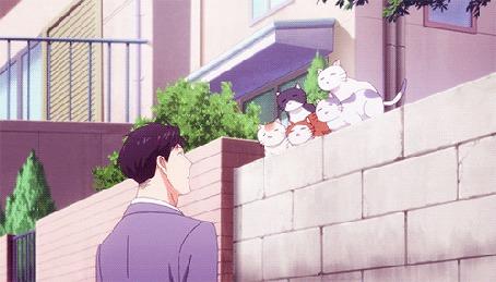 Анимация Кошки прыгают с забора на голову Умэтаро Нозаки / Umetarou Nozaki из аниме Ежемесячное седзе Нозаки-куна / Gekkan Shoujo Nozaki-kun (© zmeiy), добавлено: 29.05.2015 23:10