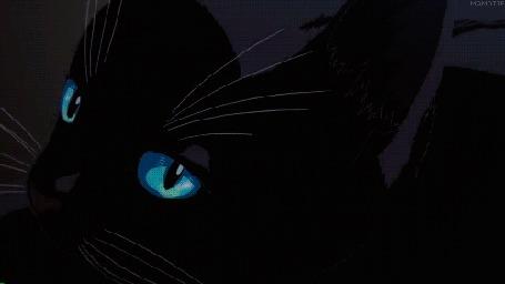 Анимация Черный кот появляется на клавиатуре рояля, отрывок из аниме Shigatsu wa Kimi no Uso / Твоя апрельская ложь (© zmeiy), добавлено: 30.05.2015 08:51