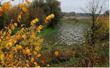 Анимация Дождь осенью на берегу реки (© Ловетта), добавлено: 30.05.2015 15:44