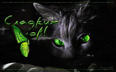 Анимация Черная кошка с зелеными глазами с зеленой бабочкой на черном фоне (Сладких снов!) Эльза 68 (© Natalika), добавлено: 01.06.2015 08:18