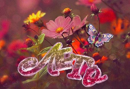 Анимация Цветная бабочка на летних цветах (Лето) Lamerna (© Natalika), добавлено: 01.06.2015 08:20