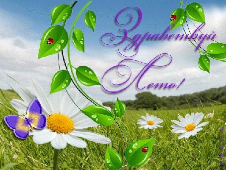 Анимация Зеленый луг, ромашки, бабочка, божьи коровки, листья, небо, Здравствуй Лето!