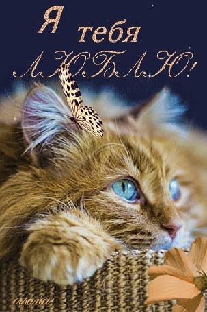 Анимация Бабочка сидит на рыжем котенке, сидящим в корзинке (Я тебя люблю!), Orsana
