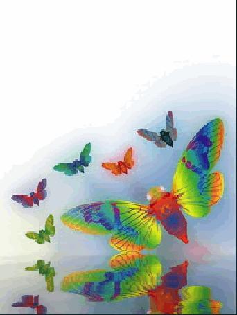 Анимация Разноцветные бабочки летают над водой, отражаясь в ней