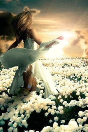 Анимация Девушка в поле белоснежных цветов (© царица Томара), добавлено: 01.06.2015 13:48