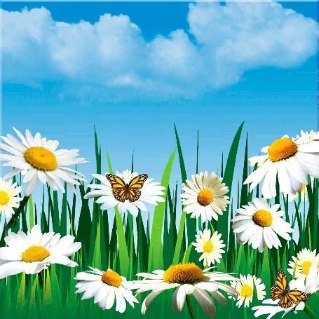 Анимация Полевые ромашки с порхающими бабочками на фоне голубого неба