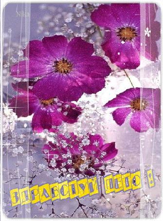 Анимация Цветы космеи на фоне мелких цветочков и прозрачной кисеи (Здравствуй Лето!) автор: Nika (© Natalika), добавлено: 02.06.2015 12:11