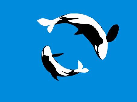 Анимация Касатка с детенышем на синем фоне (© Seona), добавлено: 02.06.2015 16:45
