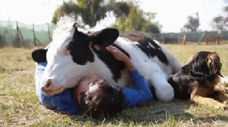 Анимация Девушка обнимает теленка, рядом лежит пес