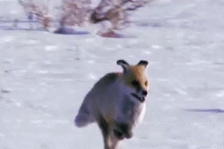 Анимация Зимняя охота с беркутом на лису (© Георгий Тамбовцев), добавлено: 06.06.2015 00:14