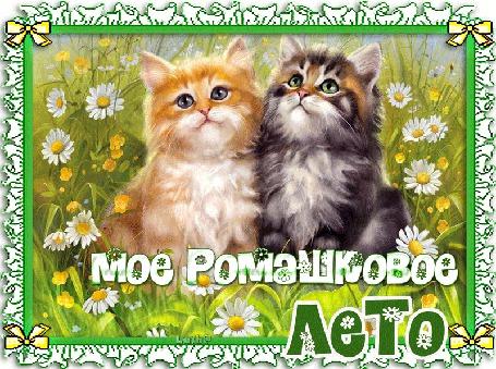 Анимация Два котенка, рыжий и серый сидят среди ромашек в поле (Мое ромашковое лето) Luch@