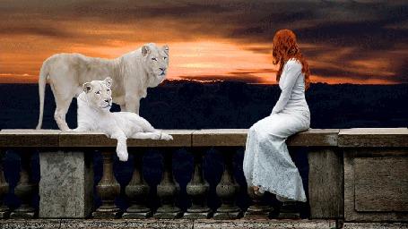 Анимация Рыжеволосая девушка в белом платье сидит на перилах рядом с белыми львами на фоне заката в небе (© Natalika), добавлено: 06.06.2015 11:41