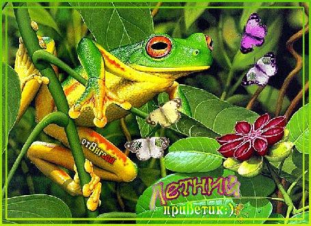 Анимация Лягушка сидит на листьях возле цветка и порхающих бабочек (Летний приветик :) ) от Ангела (© Natalika), добавлено: 06.06.2015 11:56