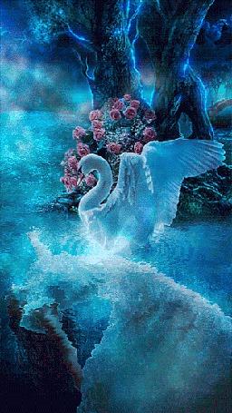 Анимация Белый лебедь опустился на гладь пруда вблизи дерева у которого растет розовый куст и смотрит на девушку под водой (© царица Томара), добавлено: 07.06.2015 13:45