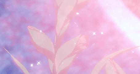 Анимация Распускающиеся розовые цветы (© zmeiy), добавлено: 08.06.2015 12:17