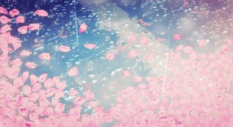 Анимация Лепестки на воде под каплями дождя (© zmeiy), добавлено: 08.06.2015 12:22