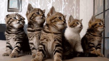 Анимация Котята одновременно вертят головами (© Solist), добавлено: 08.06.2015 12:24